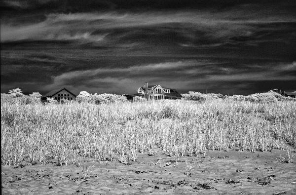 Beach Grass, Truro, MA
