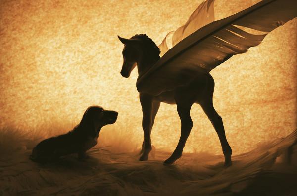Winged Pony and Dog
