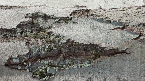 9. Eroded Slope at Seraunius Caldera