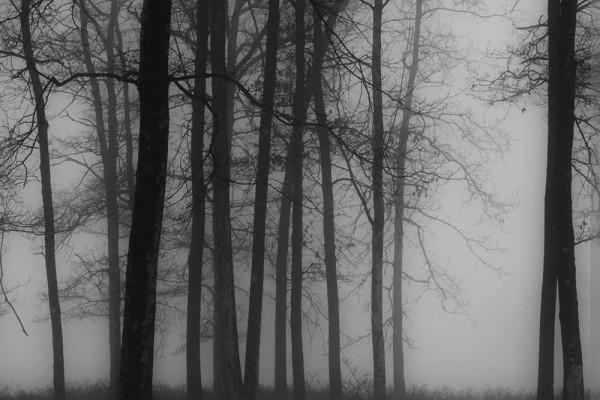 03-Foggy Morning at Quabbin Forest