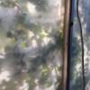 Dreamed Botany #8 thumbnail
