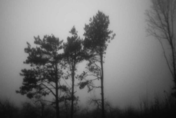05-Three Pines