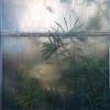 Dreamed Botany #2 thumbnail