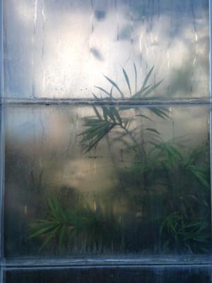 Dreamed Botany #2