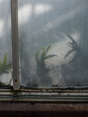 Dreamed Botany #6