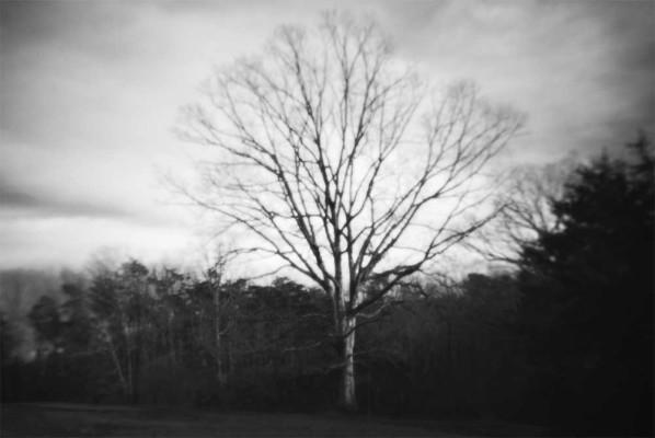 08-Shade Tree