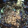 3833_Bubbles thumbnail
