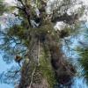 Colsia_150514-0388 thumbnail