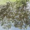 Colsia_150925-3029 thumbnail