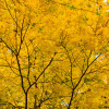 Colsia_151106-4608 thumbnail