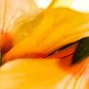 Flora-2 thumbnail