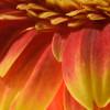 Flora-10 thumbnail