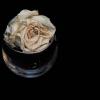 rose thumbnail