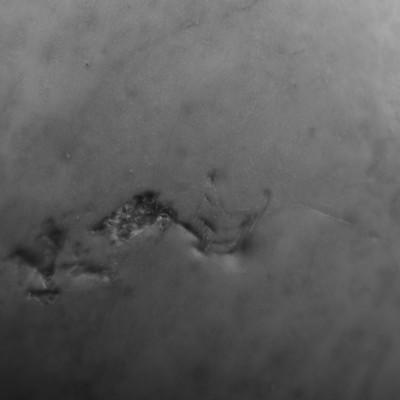 Terra Novus--12