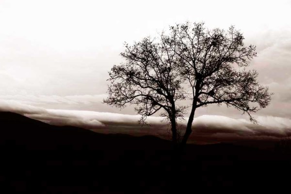 02_Mother-Nature's-Eisle_Foothills-Parkway_Roak