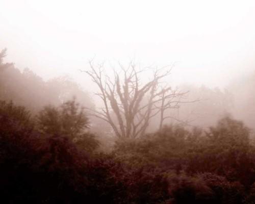 05_Mother-Nature's-Eisle_Blue-Ridge-Parkway_Roak
