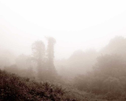 06_Mother-Nature's-Eisle_Blue-Ridge-Parkway_Roak
