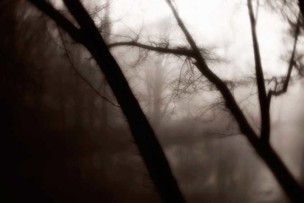 07_Mother-Nature's-Eisle_Black-Bear-Cafe_Roak