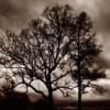 08_Mother-Nature's-Eisle_Foothills-Parkway_Roak thumbnail