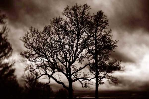 08_Mother-Nature's-Eisle_Foothills-Parkway_Roak